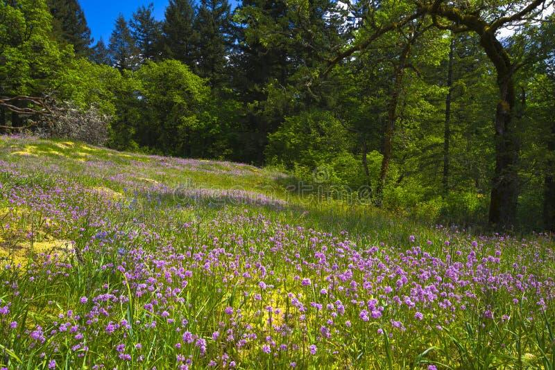 Forest Glade que sorprende con los wildflowers rosados y de la lila imagen de archivo libre de regalías
