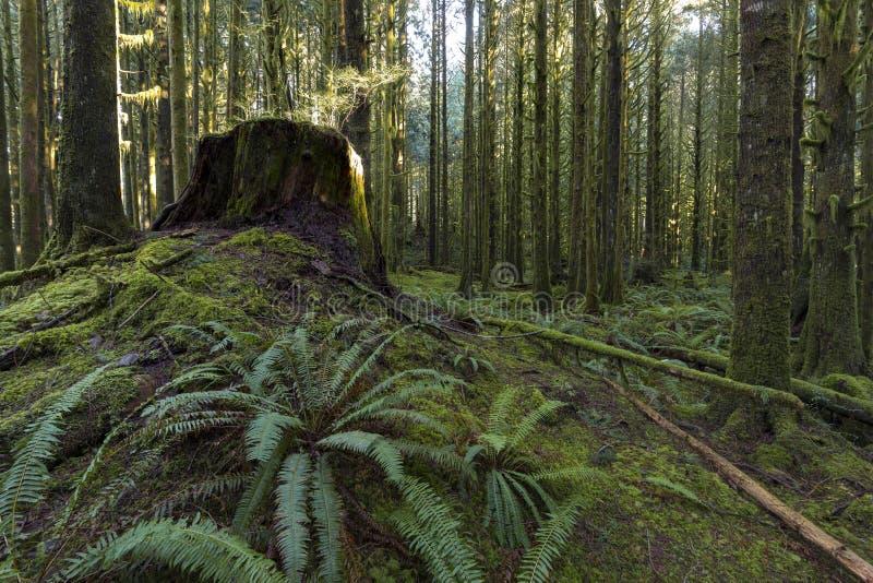 Forest Gold immagini stock libere da diritti