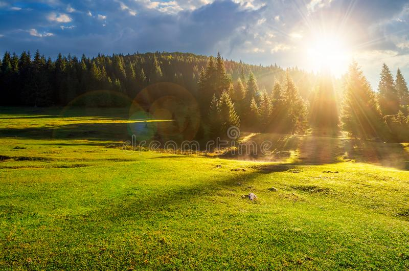 Forest on grassy meadow at foggy sunrise royalty free stock images