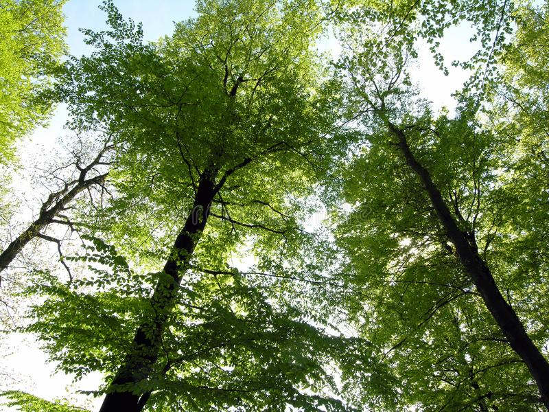 Forest green stock photography