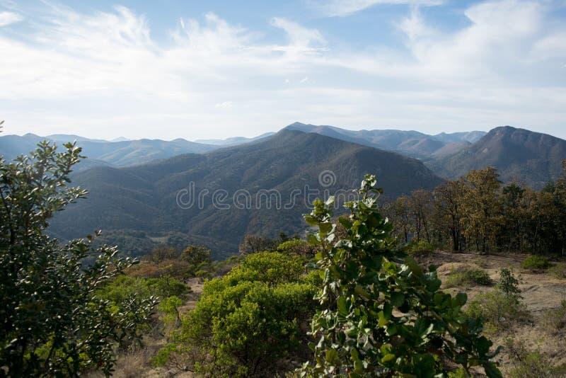 Forest Green fotografía de archivo libre de regalías