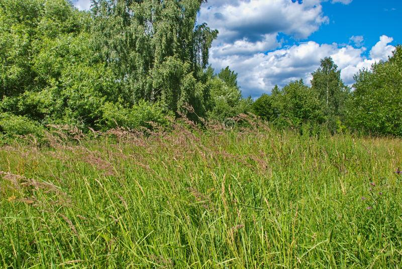 Forest and green fields on a hot summer day royalty free stock photos