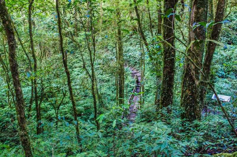 Forest With Green Plants and Trees royalty free stock photo