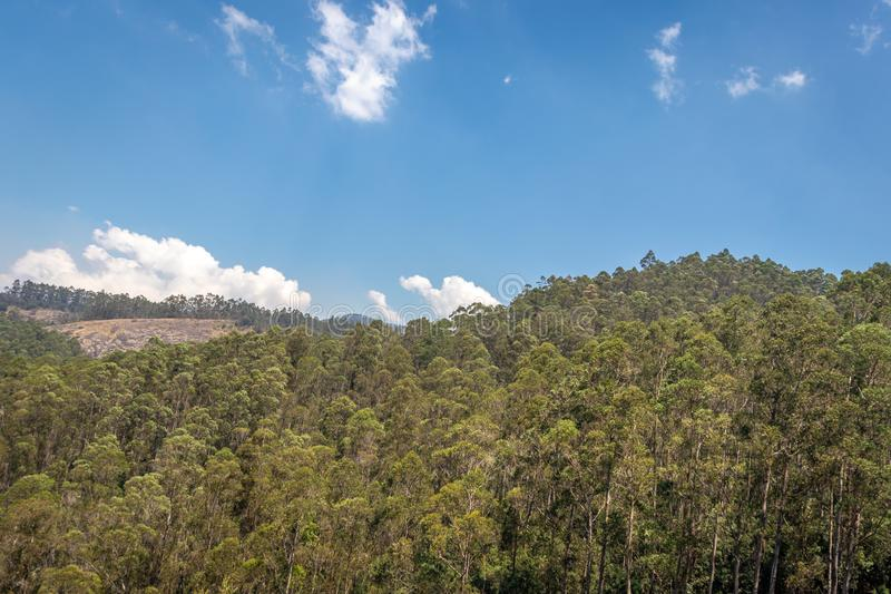 Forest Green tree go green. Image is taken at kodaikanal showing the amazing nature stock photography