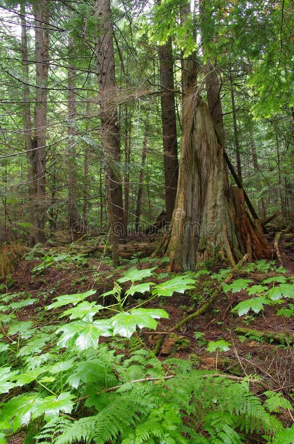 Forest Greenery royalty free stock images