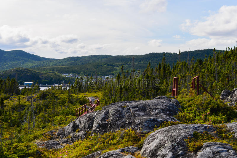 Forest in the Gros Morne stock photography