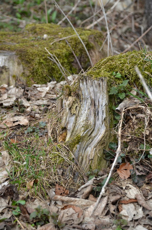 Forest Ground royalty free stock image