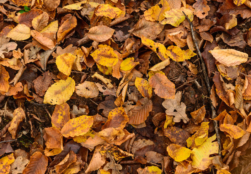 Forest ground in fall. Forest ground background in fall with yellow leaves stock images