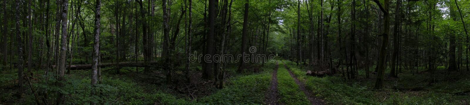 Forest ground road in sumer panorama stock photos