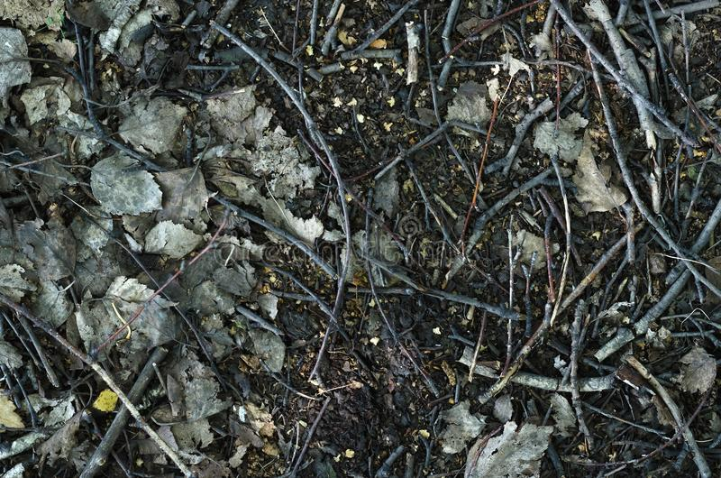 Ground texture. Forest ground texture background. Close up photo. Backdround, surface, dirty, autumn, fallen, leaves, branch, tree, textured, birch royalty free stock photos
