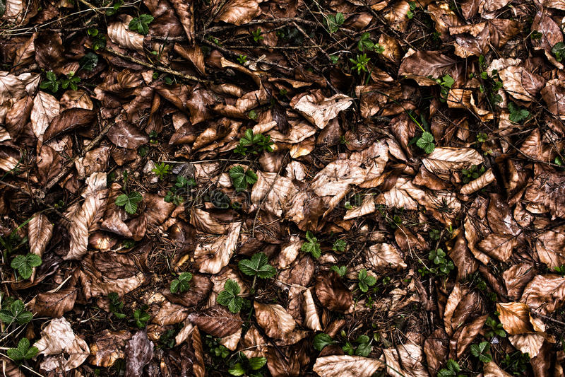 Forest ground texture. Forest ground background texture with needles and leaves stock image