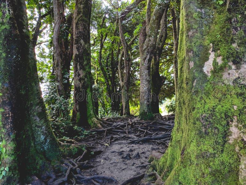 Forest Growth tropical dans Hilo Hawaï photographie stock