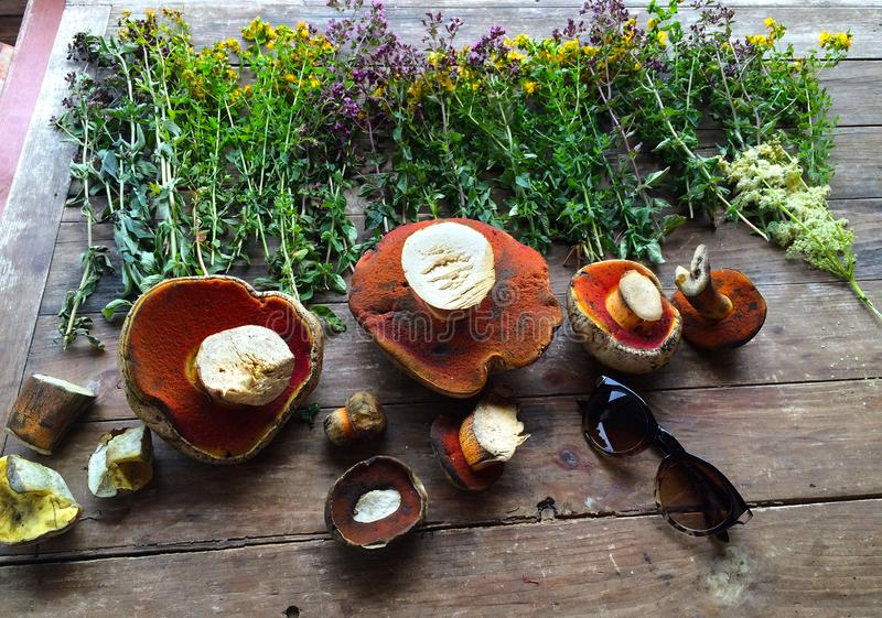 The forest harvest at the autumn. Herbs and mushrooms on the wood table background royalty free stock image