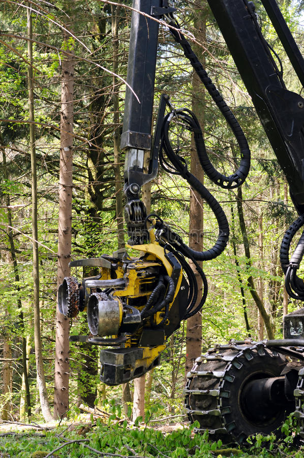Forest harvester felling head. Heavy forestry vehicle employed in cut-to-length logging operations for felling, delimbing and bucking trees stock photography