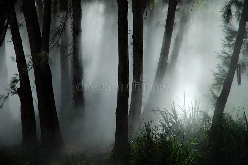 Forest haze stock photography