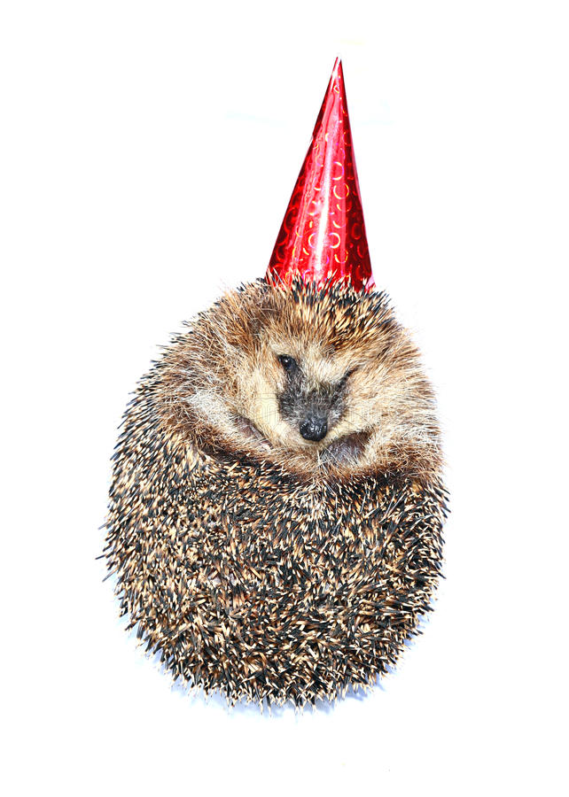 Forest hedgehog in a festive cap isolated royalty free stock image