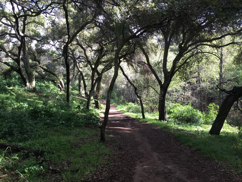 Forest hiking path stock photos