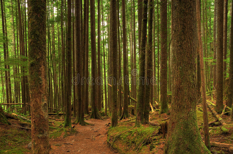 Forest hiking trail royalty free stock images