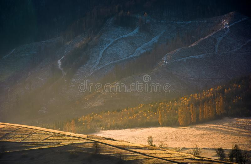 Forest on hill in golden light and haze. Lovely autumn scenery in mountains. forest on hill in golden light and haze. beautiful nature background stock images