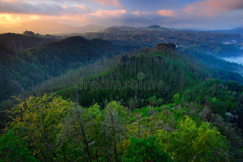 Forest hills, beautiful morning view over sandstone cliff into deep misty valley in Bohemin Switzerland, foggy background, the fog royalty free stock photography