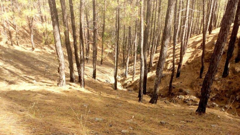 Forest Hills härligt landskap Manali som trekking fotografering för bildbyråer