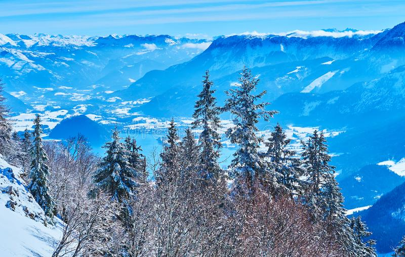 The forest in hoarfrost, Zwolferhorn, St Gilden, Salzkammergut, Austria. The stunning hazy Alpine scenery with a view on Wolfgangsee lake valley behind the royalty free stock images