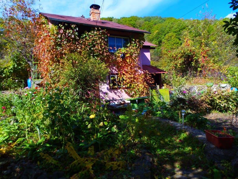 Forest House lizenzfreie stockfotografie