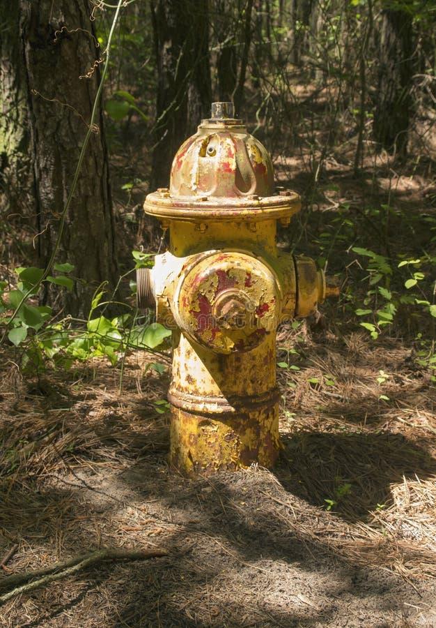 Forest Hydrant foto de stock