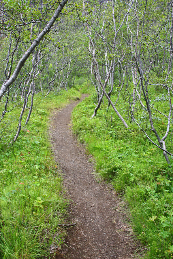 Download Forest in Iceland stock image. Image of national, path - 24188627