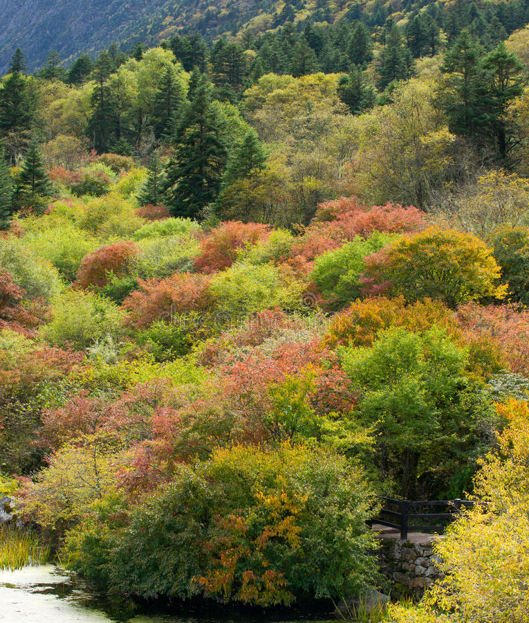 Free Forest In Autumn Royalty Free Stock Image - 21691146