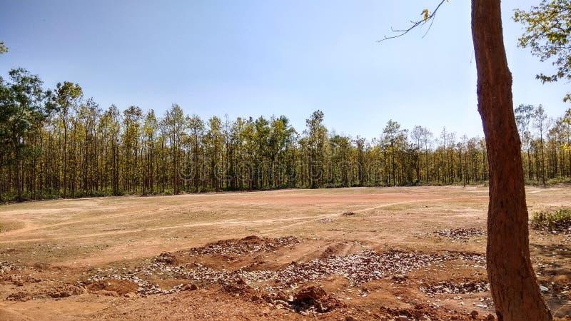 Forest Of India royalty-vrije stock afbeeldingen
