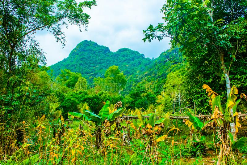 Forest jungle of the Cat Ba island, Halong Bay, Vietnam stock image