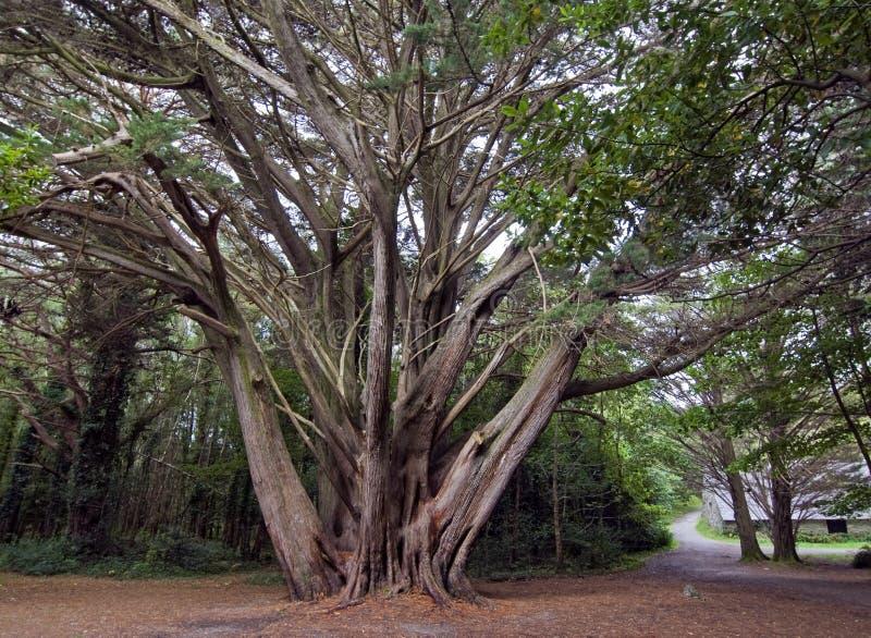 Download Forest, Killarney National Park, Stock Image - Image: 34457957