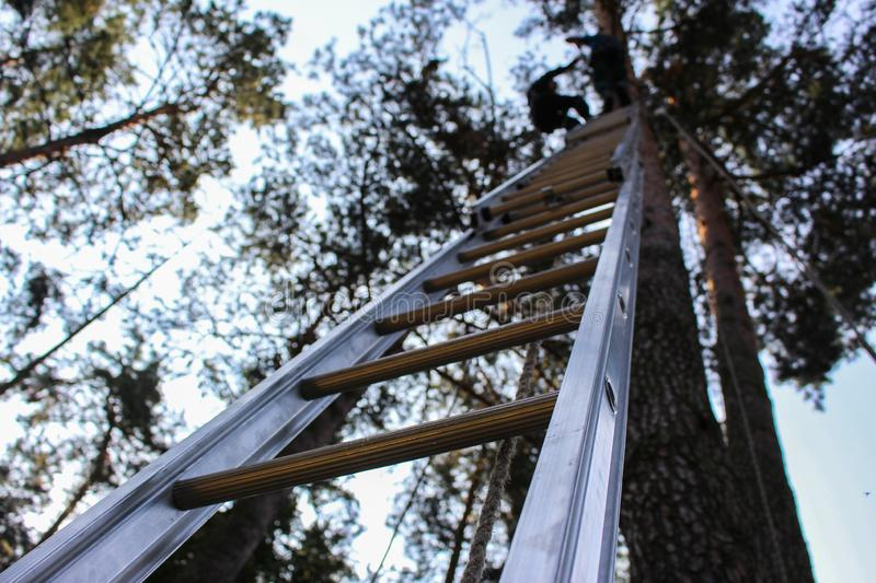Forest. Ladder leaning against a tree step by step royalty free stock photography