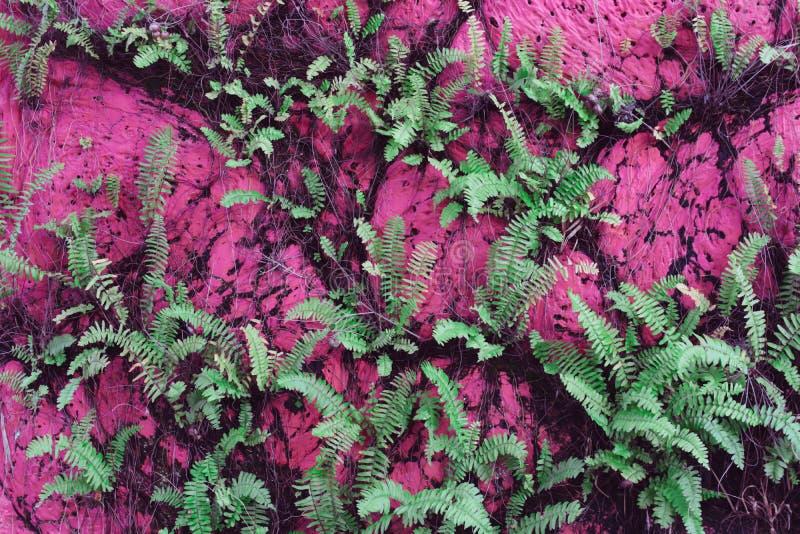 Forest Lady Fern lizenzfreie stockfotografie