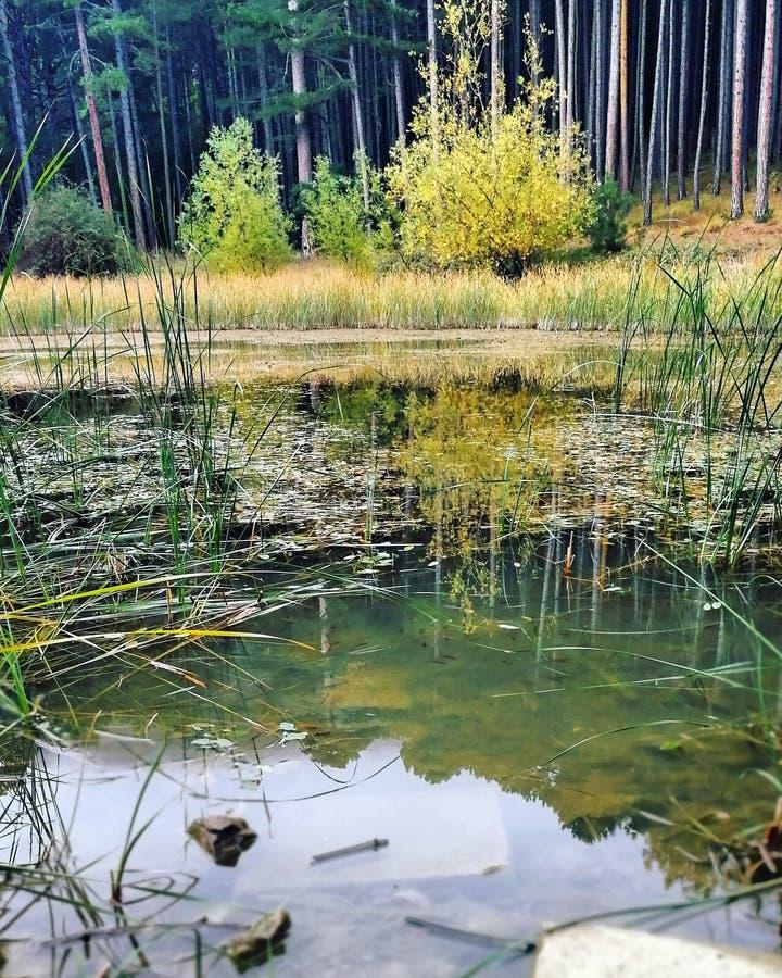 Forest Lake royalty-vrije stock fotografie