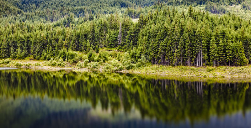 Download Forest and lake stock photo. Image of summer, quiet, outdoor - 10984004