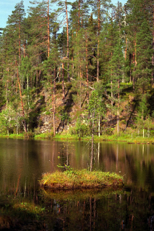 Download Forest and lake stock photo. Image of water, green, hiking - 11484038
