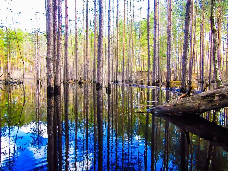 Forest Lake foto de stock royalty free