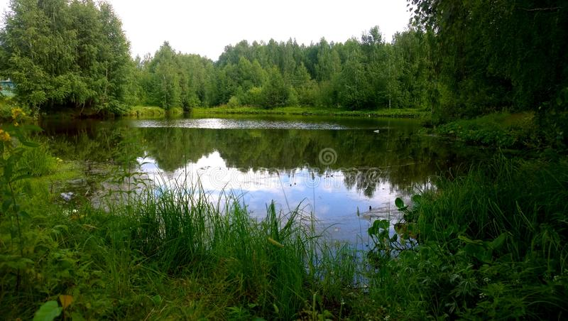 Forest Lake imagens de stock royalty free