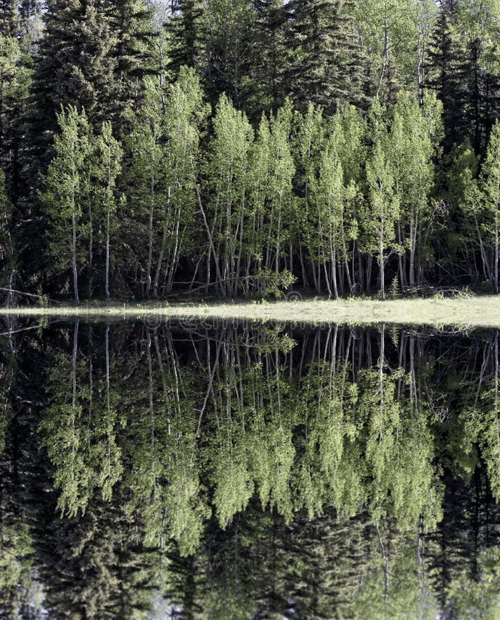 Forest Lake royalty free stock photo