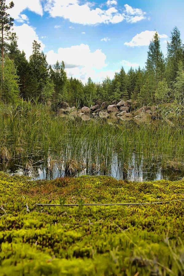 Forest Lake fotografering för bildbyråer
