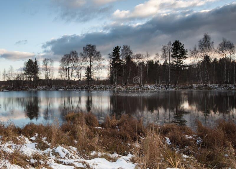 Forest Lake royaltyfri bild