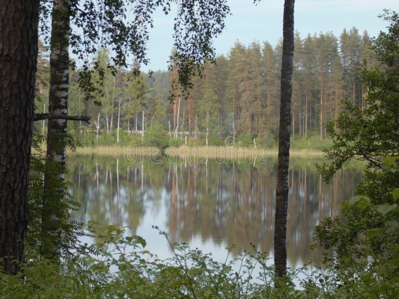 Forest Lake lizenzfreie stockbilder
