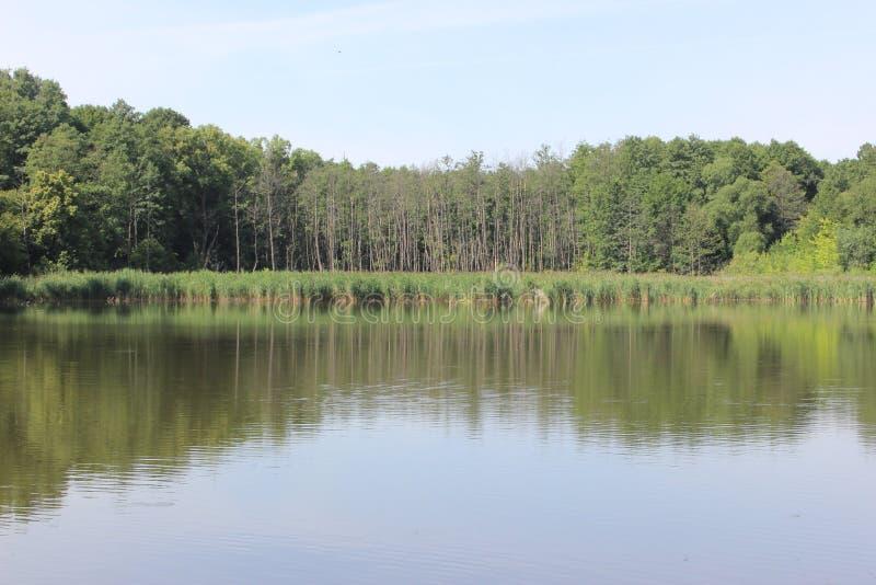 Forest Lake foto de stock