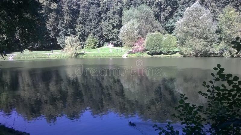 Forest Lake stockbilder