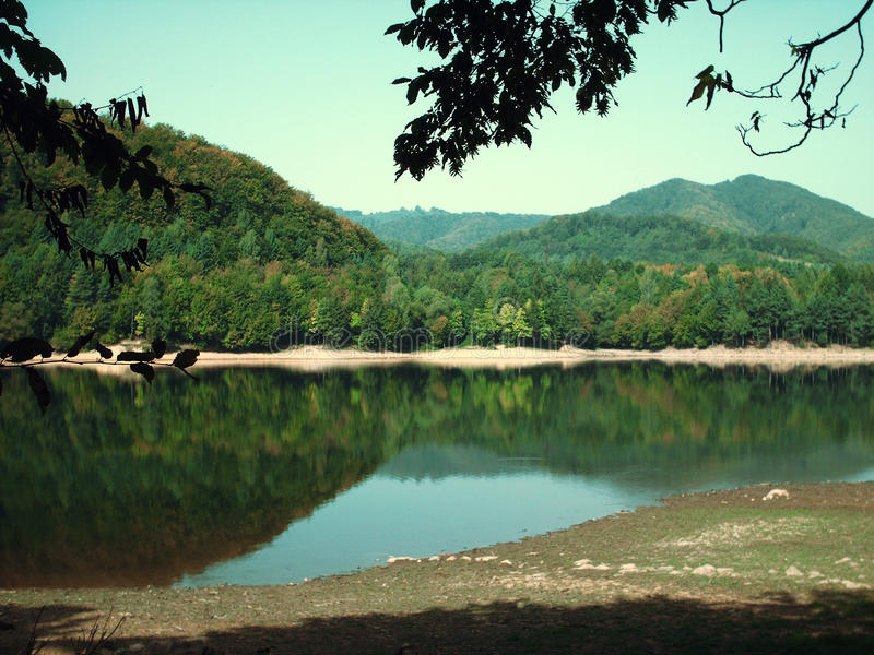 Forest Lake royalty-vrije stock foto's