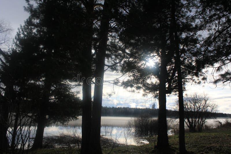Forest Lake imagenes de archivo