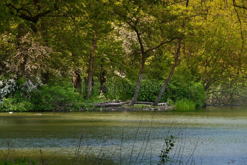 Forest Lake royaltyfri foto