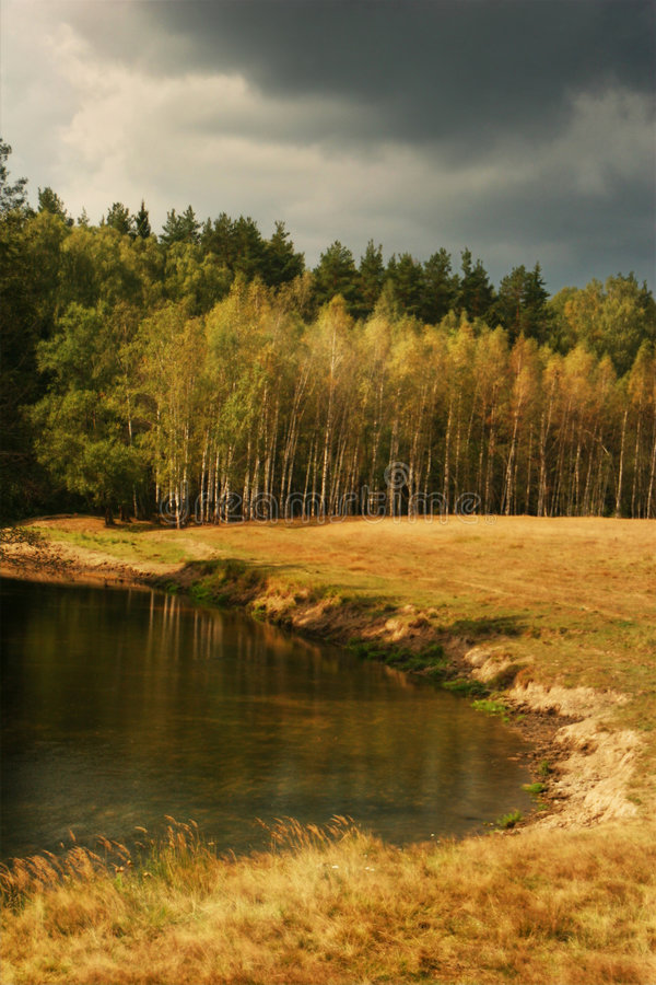 Forest and lake in countryside royalty free stock images